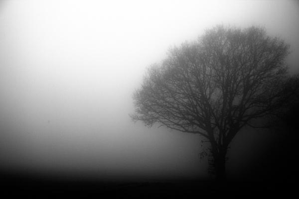 The Fog by antek76