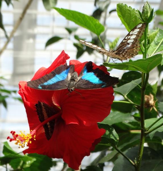Pollinators by bwarnke