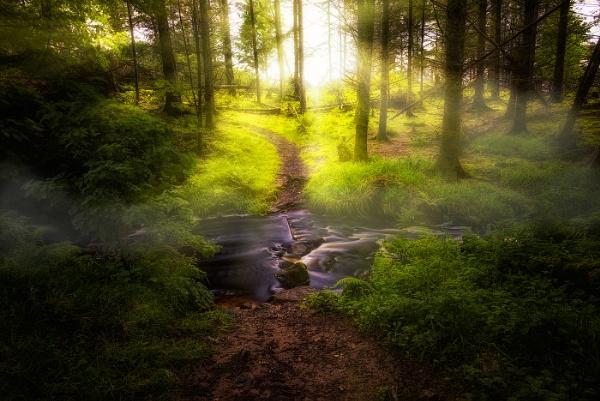 Forest Light by douglasR