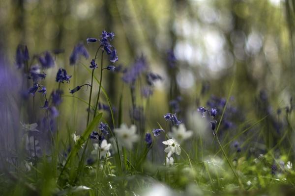 Woodland spring flowers by dawnstorr
