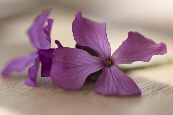 Little Purple Flower by Disee