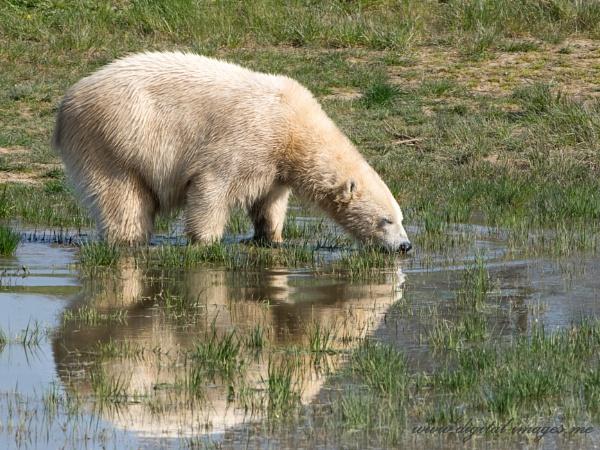 Polar Reflection by Alan_Baseley