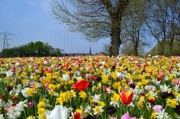 flowering view
