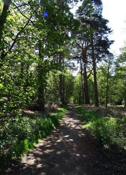 A woodland path at Sandringham by Mags100