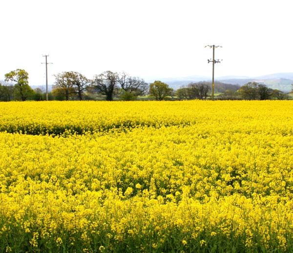 Yellow! by ddolfelin