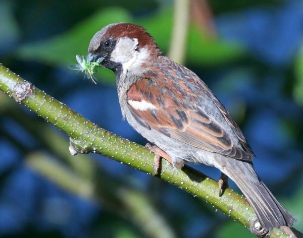 Sparrow Catch by tonyguitar