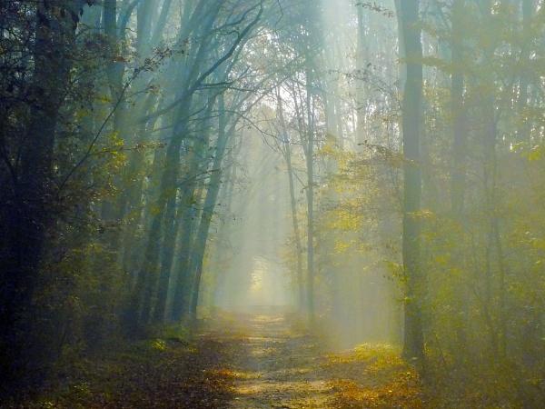 Fog by wacrizphoto