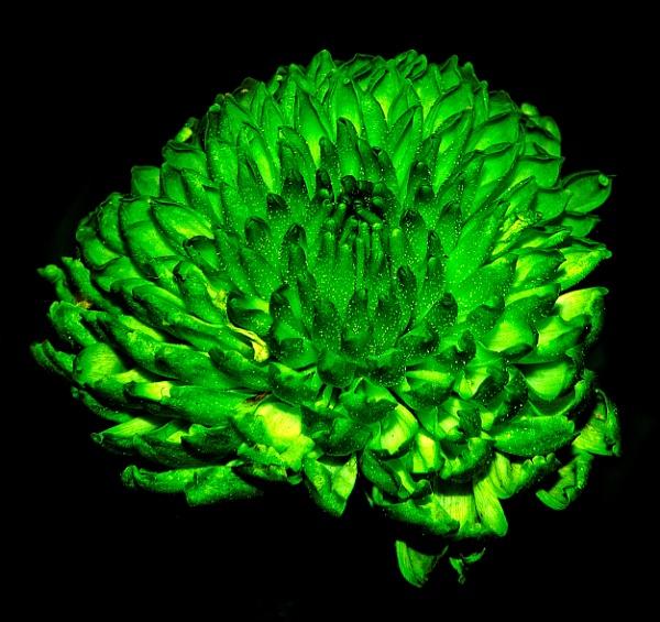 Green by Alda