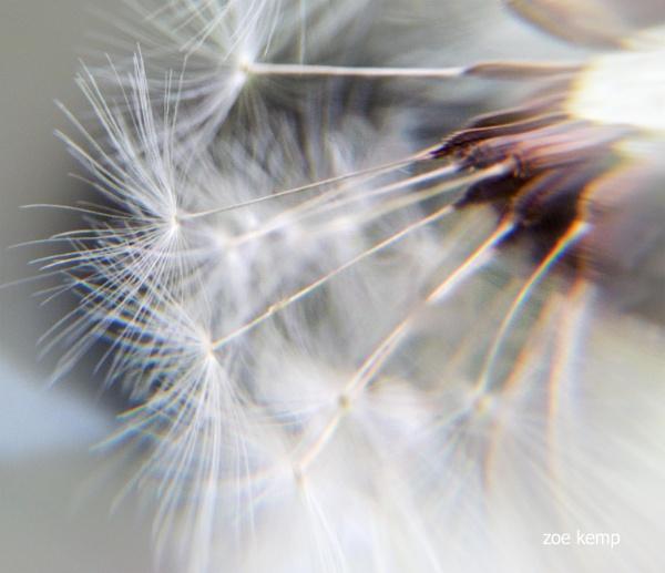Through mini crystal ball by ZoeKemp