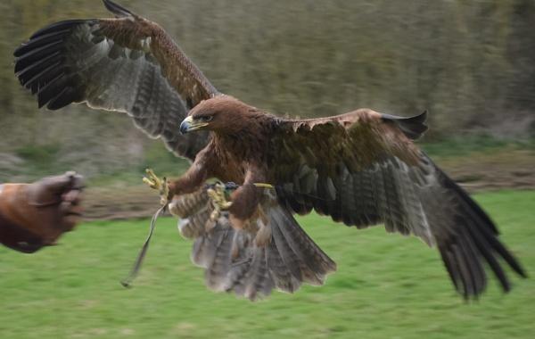 Right talon down a bit! by DaveHoskins