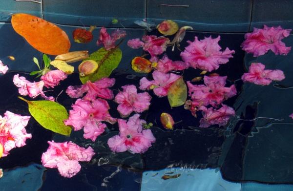 Flower flotsam by oldgreyheron
