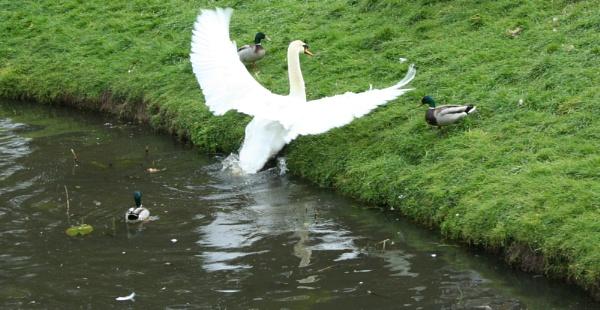 Take off by pamzan