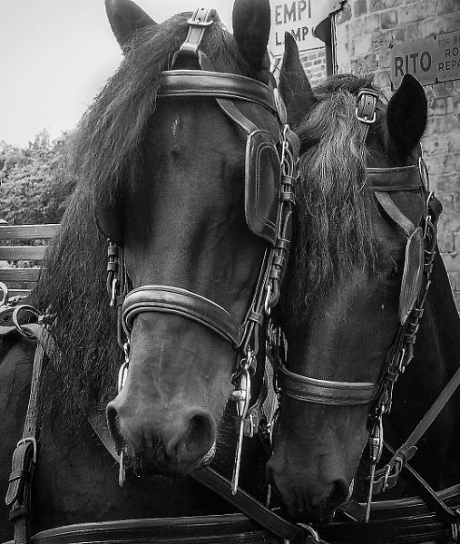 Heavy Horses by ColinScott
