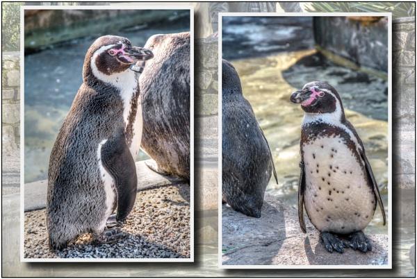 Penguins by TrevBatWCC