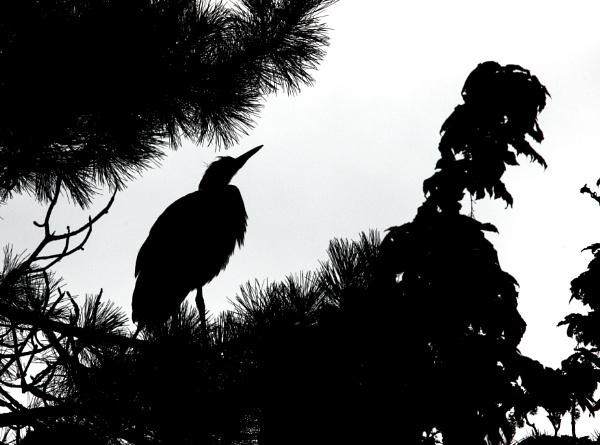 Heron Silhouette by Bigdenbo