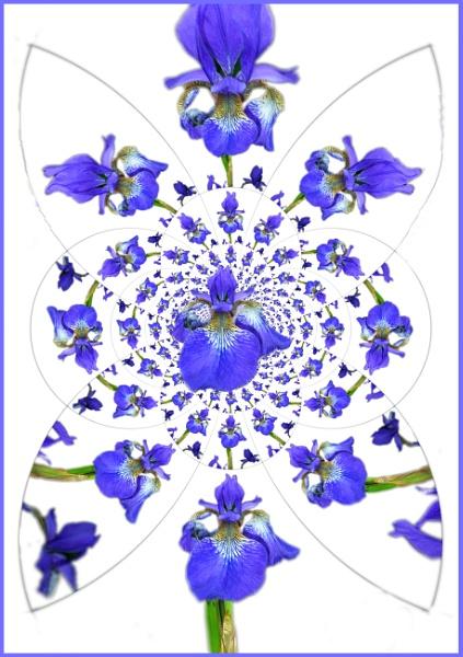The Iris by fificat100