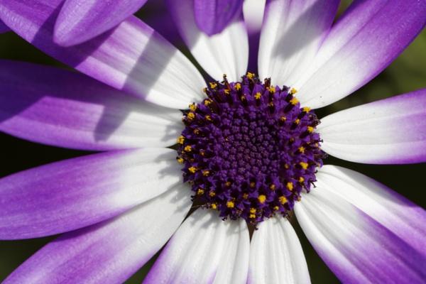 Purple by vickylou