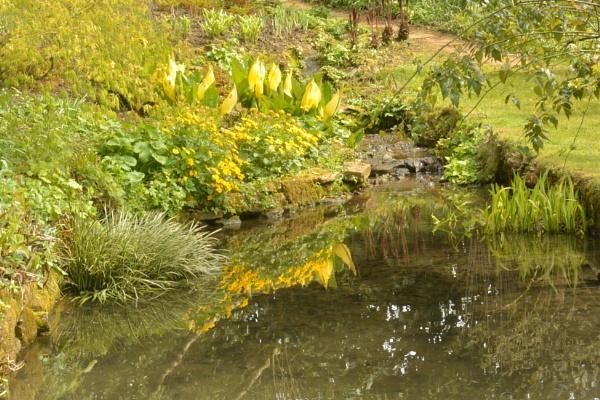 Yellow Reflections by Suzicoo