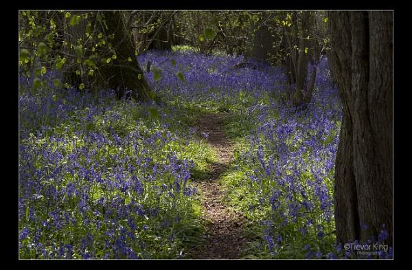 Purple Path by Snapper_T