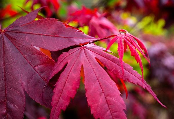 New Leaf by Nikonuser1
