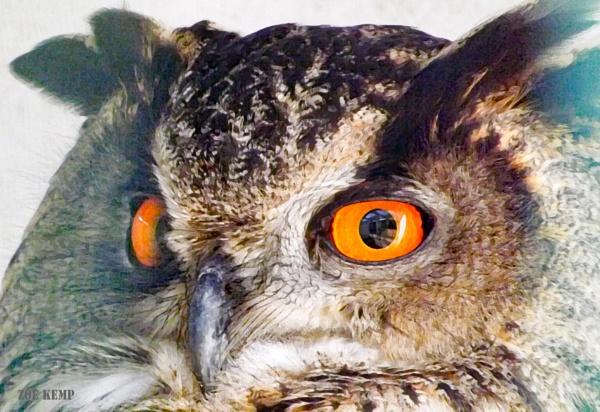 Eurasian Eagle Owl ~ Bubo bubo by ZoeKemp