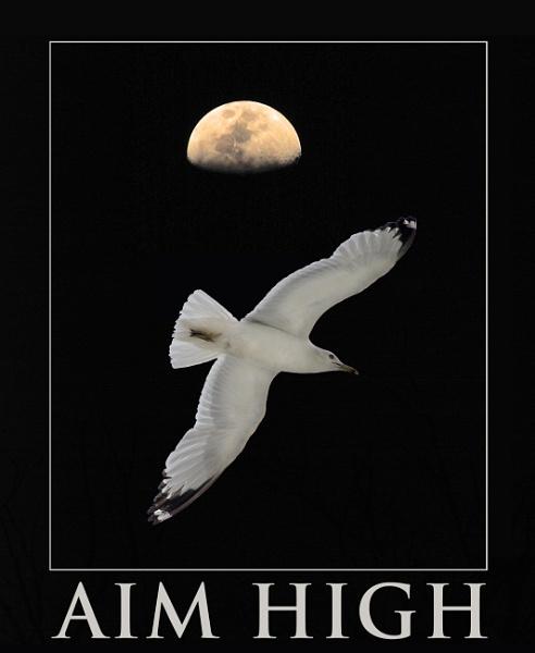 Aim High by brieng