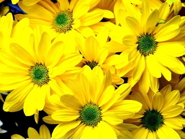 Bring me sunshine. by adrianedwa
