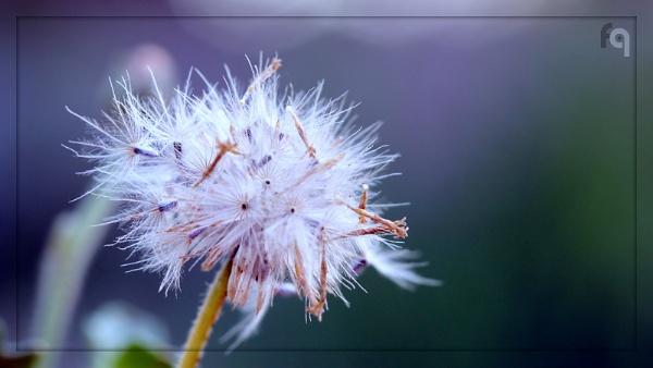 Bloom Time by ferozeqasim