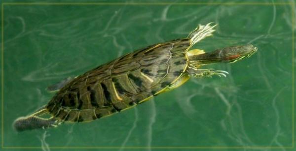 Lake Kournas wildlife by CarolG