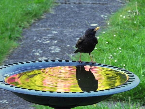 Morning Reflections by ianmoorcroft