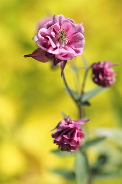 Pink by vickylou