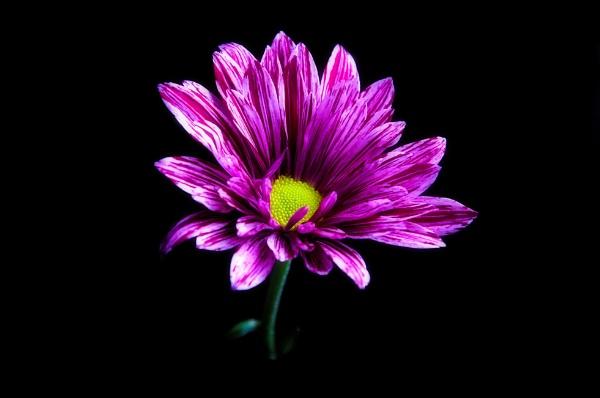 Flower by Alda