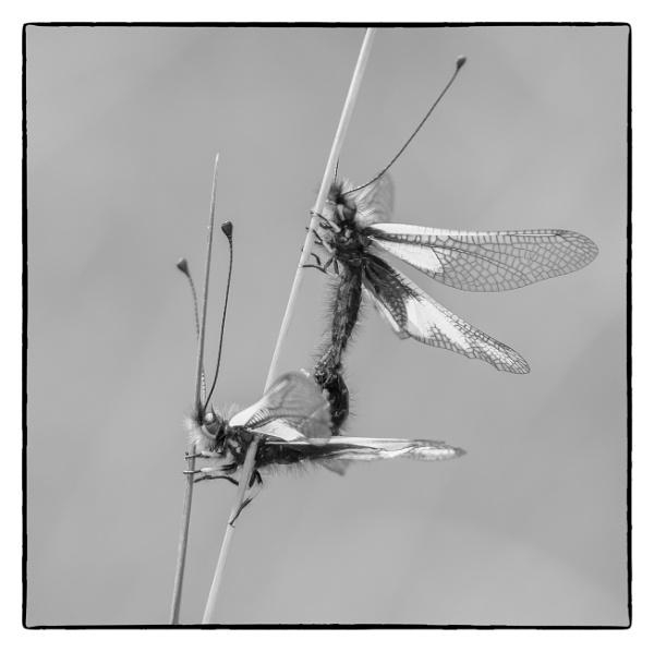 Makin\' owlflies by chataignier