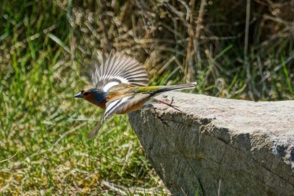 Taking flight. by macprints