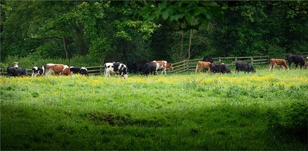 Bullocks! by whatriveristhis