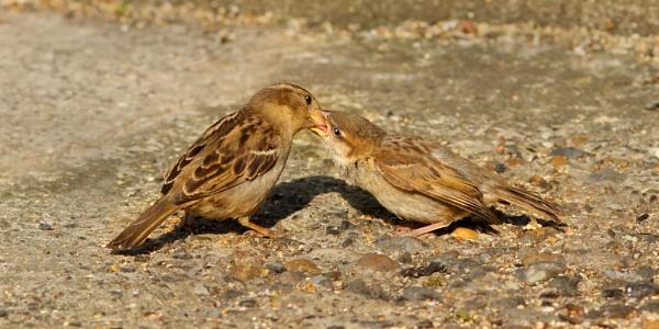 Feeding Time by bobpaige1
