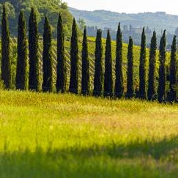 Sunrise in the Chianti valley