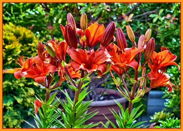 Garden Colour by Stuart463