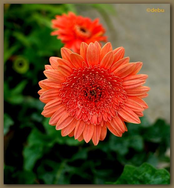 Lovely Flower... by debu