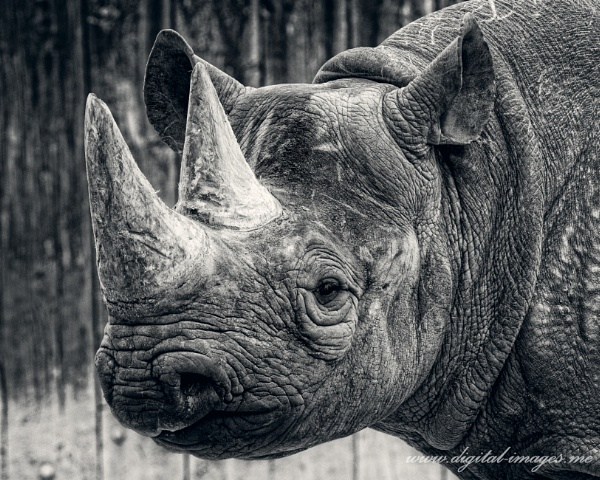 Black (and White) Rhino by Alan_Baseley