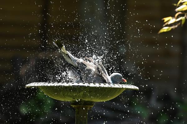 Bath time by nealie