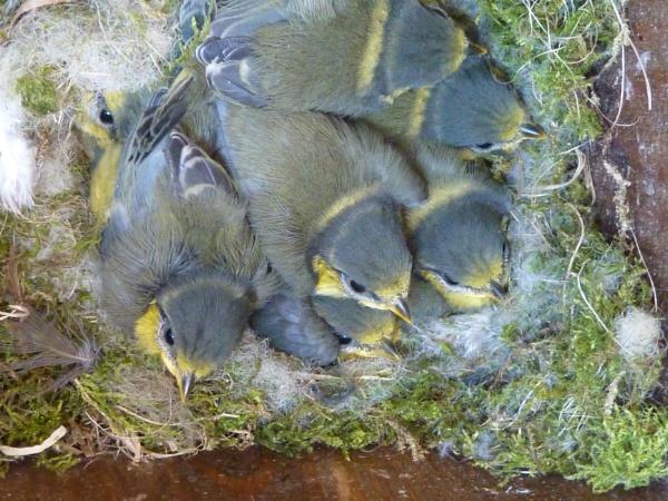 Seven in a Nest by netta1234