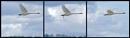 Pooper Swan by nrzam