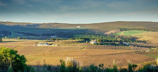 A view across the Hemel-en-Aarde valley by cimic
