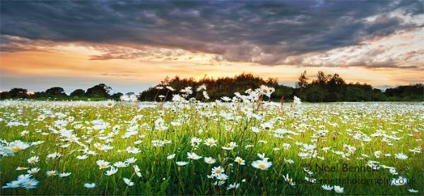 Fields of Glory by NoelBennettPhotography