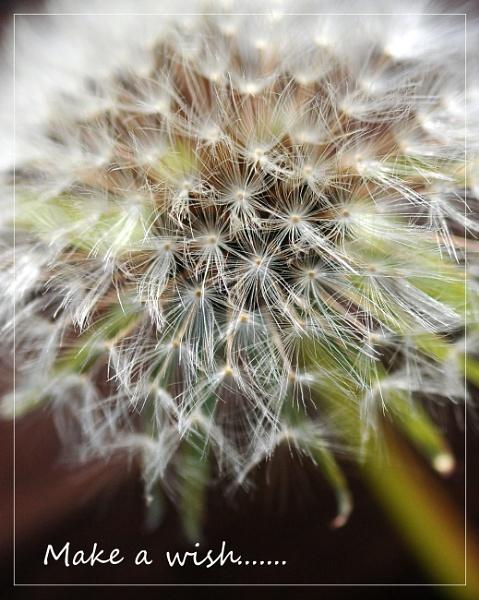 make a wish by shaz4