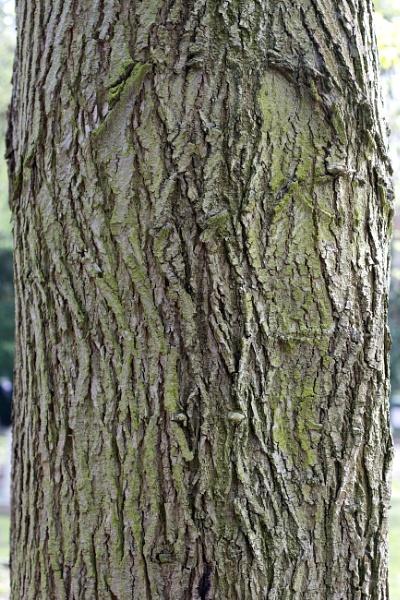 Tree Bark by pcollingwood