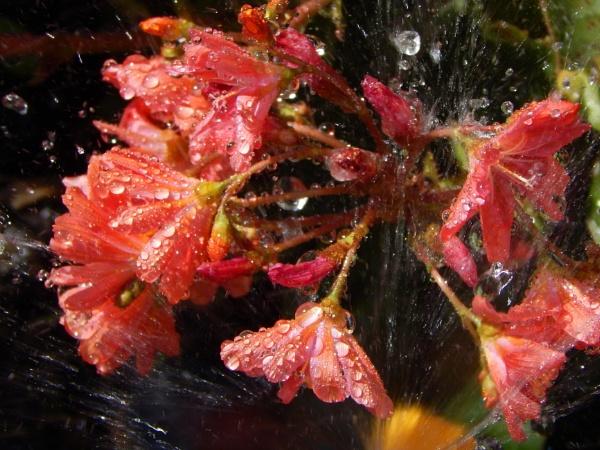 Splash by digital_boi