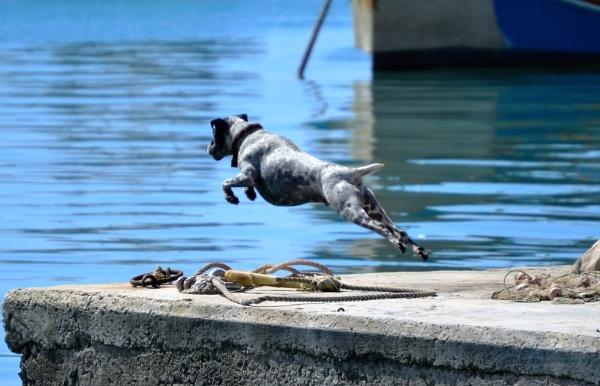 Dog Jump by tigger1971