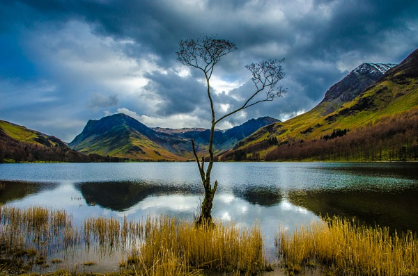 The Tree (Colour) by seahawk